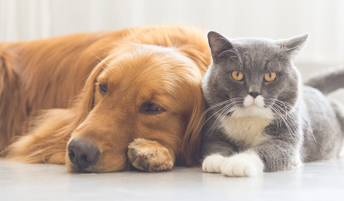 Why You Should Care for Your Pet Like You Take Care of Yourself