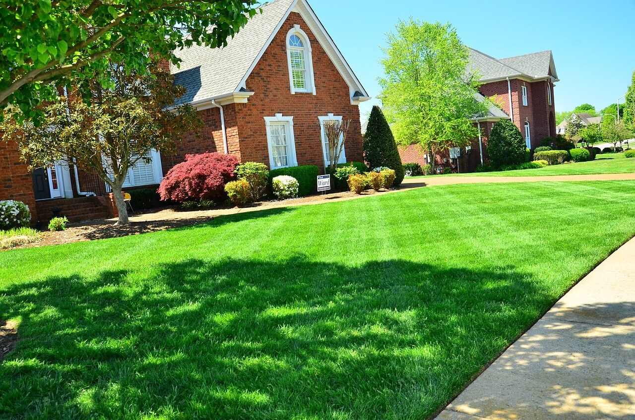 Professional Lawn Treatment Services