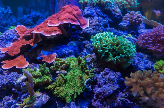 How To Start Your Own Reef