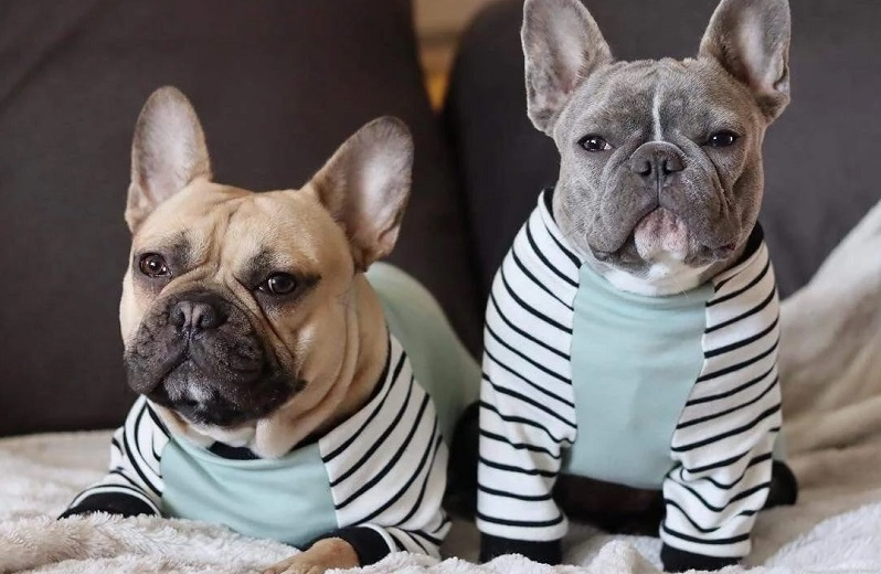 A guide on summer clothes and accessories for your Frenchie bulldog