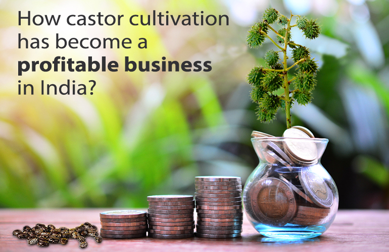 How castor cultivation has become a profitable business in India?